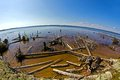 Snaged shore in karelia of white sea baltic canal fish eye lens Royalty Free Stock Images