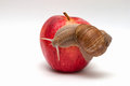 Snail on apple. Royalty Free Stock Photo