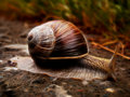 "Snail art ""even a will eventually reach its destination "" Stock Photography"