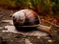 "Snail art ""even a will eventually reach its destination "" Stock Photography"