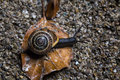 Snail on an autumn background closeup Stock Image