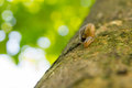 Snail on branch with blurred green leaves in background Royalty Free Stock Photo