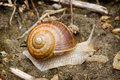 Snail crawling on the sand Royalty Free Stock Photography