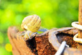 Snail crawls after rain in the yard Stock Photography