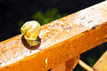 Snail crawls after rain in the yard Royalty Free Stock Photography