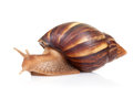 Snail crawls on white background Stock Photos