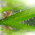 Snail on dewy grass close up Stock Photography