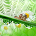 Snail on dewy grass close up Stock Image