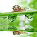 Snail on dewy grass close up Stock Photo
