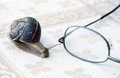 Snail and eyeglasses picture of a Royalty Free Stock Photos