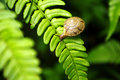 Snail on fern Stock Images