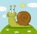 Snail with a flower in its mouth Stock Photos