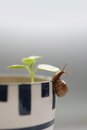 Snail on a in a flower pot elongated tentacles in what looked Stock Image