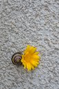 Snail and flower Royalty Free Stock Photo