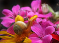 Snail in the flowers Royalty Free Stock Photos
