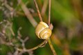 Snail garden on a branch Royalty Free Stock Photography