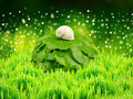 Snail on the garden grass nature background Stock Photos