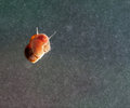 A snail on a glass surface. Royalty Free Stock Photo