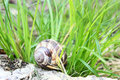 Snail in the grass green Stock Photo