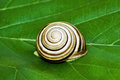 Snail on a green leaf Stock Images