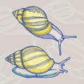 Snail hand drawn illustration of Royalty Free Stock Images