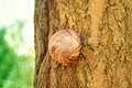 Snail hidden on tree wooden in forest Stock Images