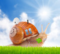 The snail with his mobil home on the road. Royalty Free Stock Photo