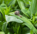 Snail on leaf in garden Stock Photos