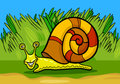 Snail mollusk cartoon illustration of funny with shell Stock Image
