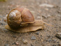 Snail nature is all the animals plants and other things in the world that are not made by people and all the events and processes Royalty Free Stock Photo
