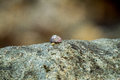 Snail pace Royalty Free Stock Photo