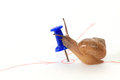 Snail reaching goal kiss target Royalty Free Stock Photo