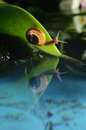 Snail reflection Stock Image