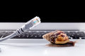 Snail with rj45 connector symbolic photo for slow internet Royalty Free Stock Photo