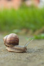 Snail on road Royalty Free Stock Photo