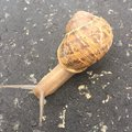 Snail on the road unclose Royalty Free Stock Photo