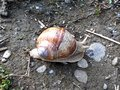 Snail rock day house small Royalty Free Stock Photography