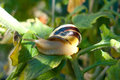 Snail on a sheet grawl Royalty Free Stock Photo