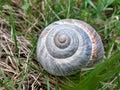 Snail Shell in a green field