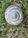 Snail Shell in a green field