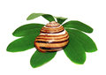 Snail shell on a green leaf isolated Royalty Free Stock Photo