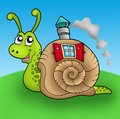 Snail with shell house on meadow Royalty Free Stock Photo