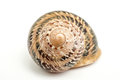 snail shell over a white background with good detal on the natural design.