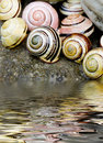 Snail shell still life Royalty Free Stock Photo