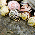 Snail shell still life Royalty Free Stock Photography