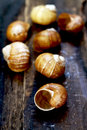 Snail shell on wooden table Royalty Free Stock Image