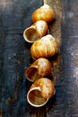 Snail shell on wooden table Stock Photos