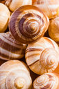 Snail shells group of escargots de bourgogne under the sunlight Stock Image