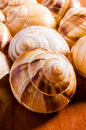 Snail shells group of escargots de bourgogne under the sunlight Royalty Free Stock Photography