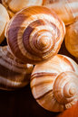 Snail shells group of escargots de bourgogne under the sunlight Stock Photo